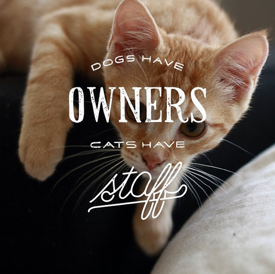 // Dogs Have Owners, Cats Have Staff
