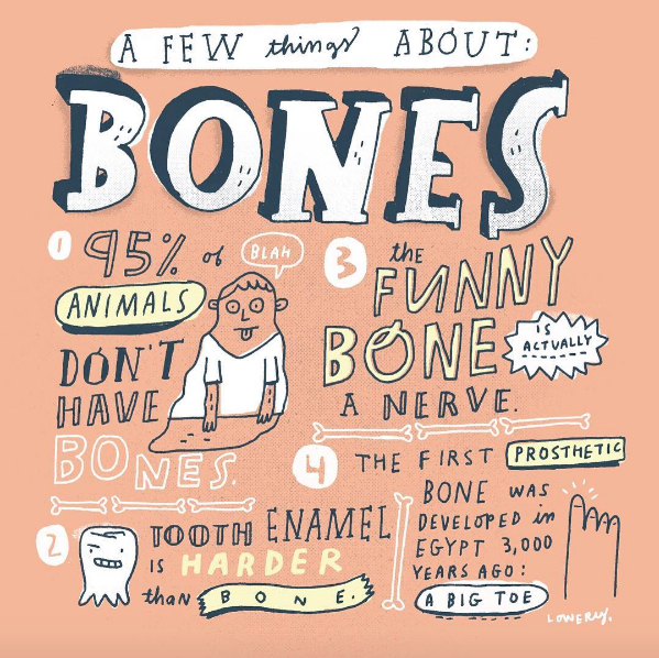 // Bone Facts