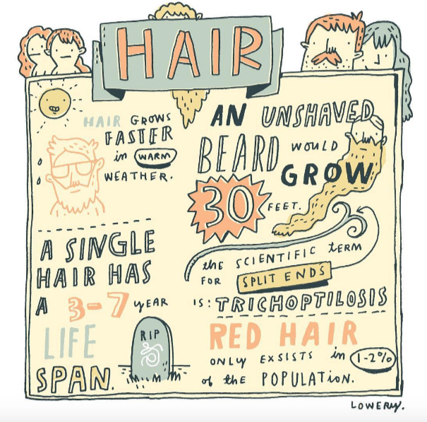 // Hair Facts